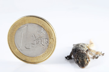 Gecko Lizard and Coin