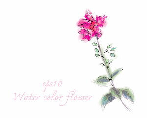 Water color flower on white background