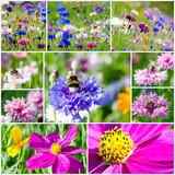Collage: Bunte Kornblumen mit Bienen und Cosmeen :)