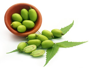 Medicinal neem fruits