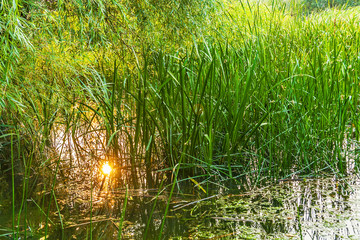 The reflection of the sun in water marshes at sunset