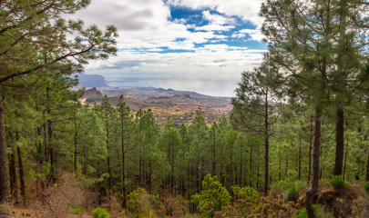 Santa Cruz de Tenerife through a forest of pines