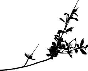 sakura branch black isolated silhouette