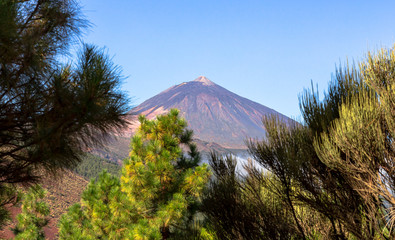 The Teide volcano behind trees in Tenerife, Spain