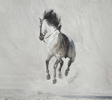 Photo presenting the galloping horse