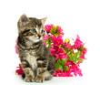 tabby kitten and flowers