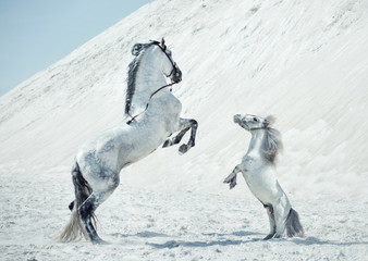 Fabulous scene of the jumping horses