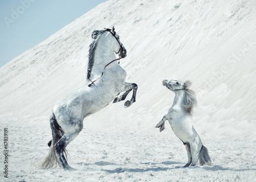 Zdjęcia na płótnie, fototapety na wymiar, obrazy na ścianę : Fabulous scene of the jumping horses