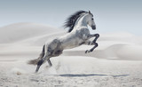 Picture presenting the galloping white horse poster