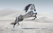 "Постер, картина, фотообои ""Picture presenting the galloping white horse"""