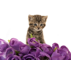 Cute kitten with purple flowers