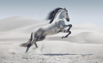 fototapeta obraz przedstawiający galopujący biały koń
