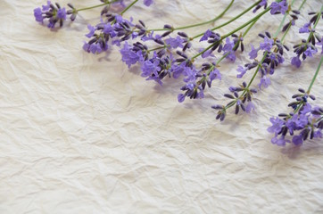 lavender on paper