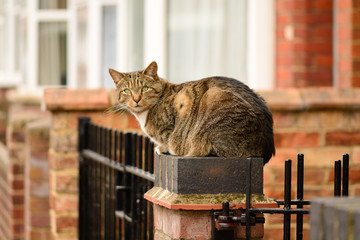 Cat waiting for oweners on gate post
