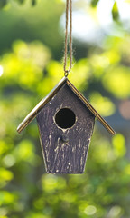 Bird House in Summer Sunshine & Green Leaves