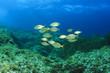 Fish School Mediterranean Sea