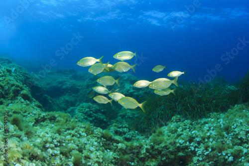 Fotobehang Koraalriffen Fish School Mediterranean Sea