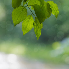 background of green leaves and bokeh