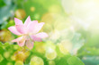canvas print picture - Lotus flower
