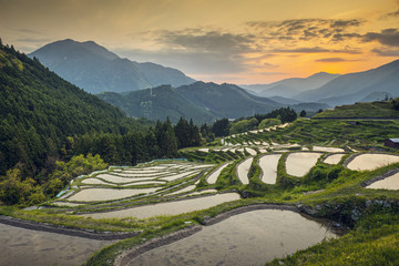 Rice Terraces in Kumano, Japan