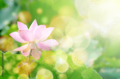 canvas print picture Lotus flower
