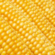 canvas print picture - corn in detail