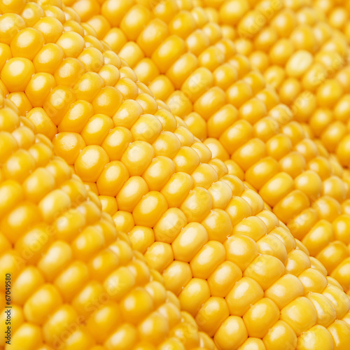 canvas print picture corn in detail