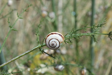 solitude de l escargot