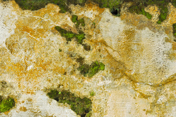 Texture of old concrete grunge wall covered with lichen moss mol