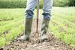 Leinwanddruck Bild - Close Up Of Farmer Working In Organic Farm Field