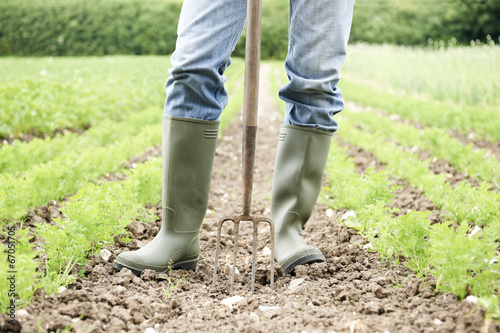 Leinwanddruck Bild Close Up Of Farmer Working In Organic Farm Field