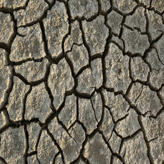 cracked dried earth
