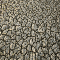 cracked dried soil - background