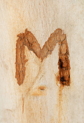the letter M engraved in a tree trunk