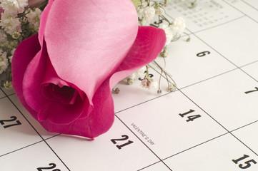Single Rose on Calender