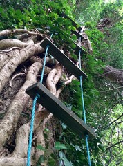 Homemade rope ladder climbs tree