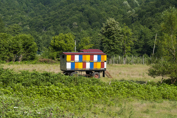 Apiary in the Valley