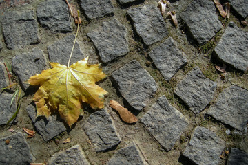 maple_leaf_granite