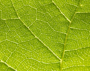 Background of the green sheet. macro