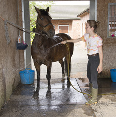 Young female rider washing down her pony in the stable yard