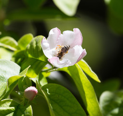 bee on flowers tree