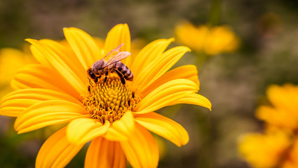 Yellow flower with bee inside