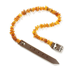Baltic amber pet collar isolated on the white