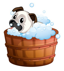 A cute bulldog inside the bathtub