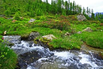 Tiroler Bergbach mit Almrosen