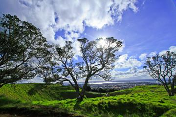 tree at auckland's Mount Eden New Zealand