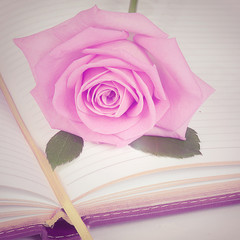 The rose on the book