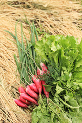 Beam of red radish and greens
