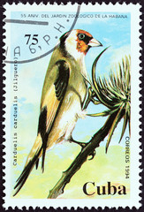 Eurasian goldfinch (Cuba 1994)
