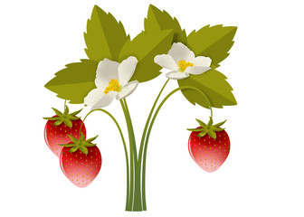 земляничный кустик с цветами и ягодами